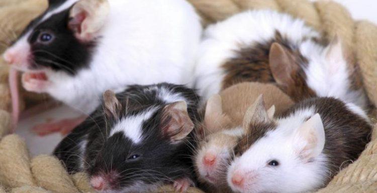 ارخص شركة مكافحة الفئران بالرياض – اتصل على