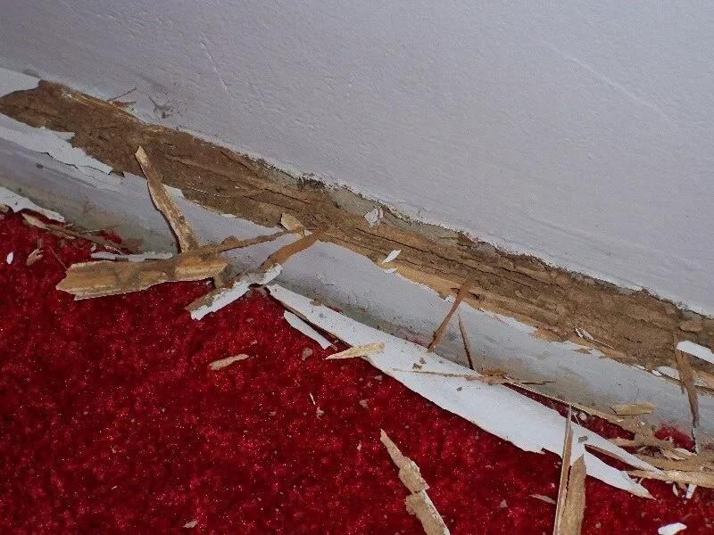 اضرار العتة على الأخشاب