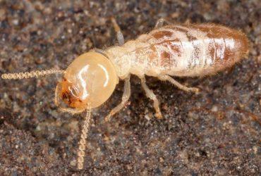شركة مكافحة النمل الابيض بالرياض – اتصل بنا أفضل شركات رش النمل الابيض