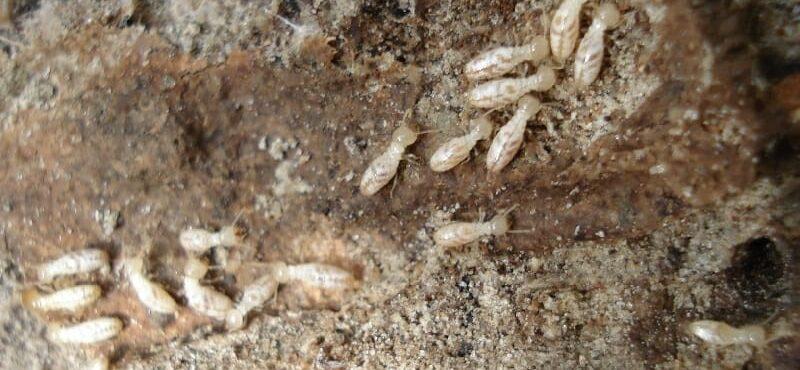 شركة مكافحة النمل الابيض بمكة و رش البطحة