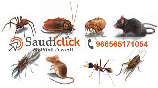 النمل المنزلي وطرق التخلص منه نهائيا