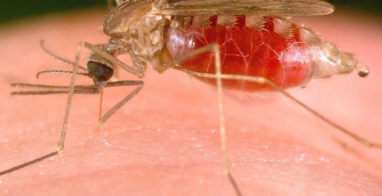 طرق التخلص من الناموس-بمواد طبيعية