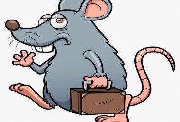 فئران المنازل وكيفية التخلص منها